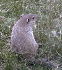 groundhog2.jpg