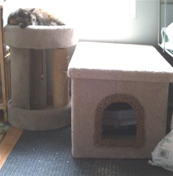 kittycorner.jpg