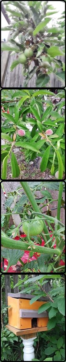 gardenbounty